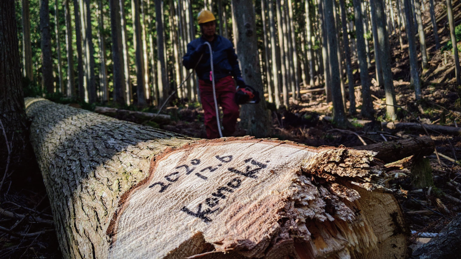 konoki製品に使われる杉の木
